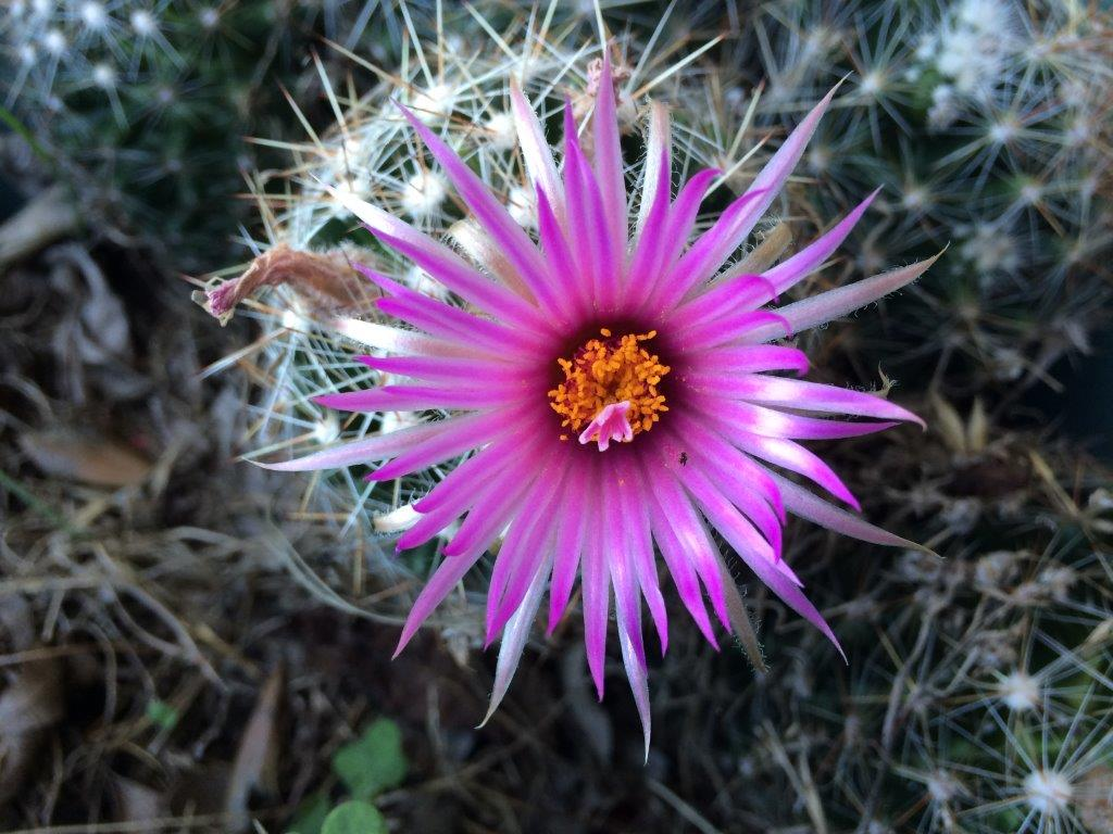 Cactus Flower submitted by Sherman Jackson